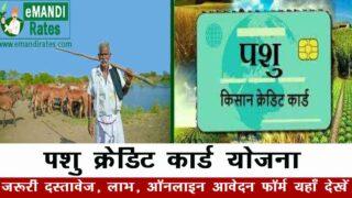 Haryana Pashu Kisan Credit Card Yojana 2021