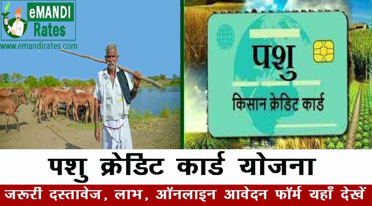 पशु किसान क्रेडिट कार्ड योजना क्या है ? ऑनलाइन आवेदन- दस्तावेज, लाभ, आवेदन फॉर्म 2021