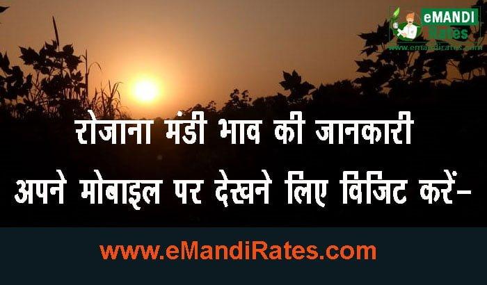 Know Today Ashoknagar mandi bhav
