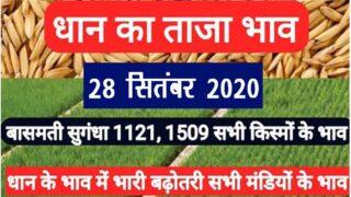 Today Paddy Mandi Bhav 28 September