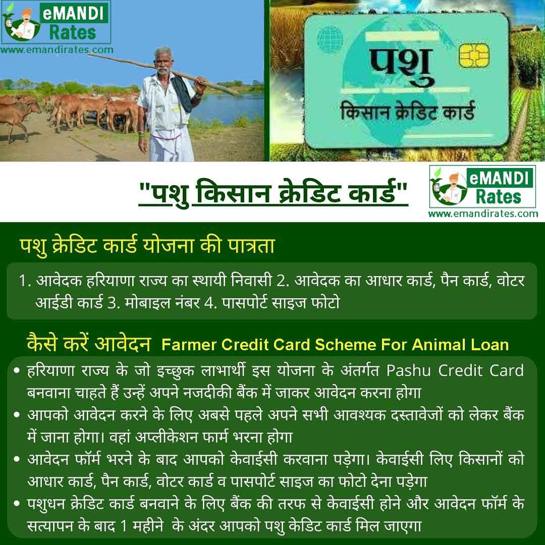 Pashu Kisan Credit Card Yojana in Haryana