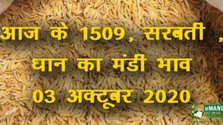 1509 Dhan ka Rate