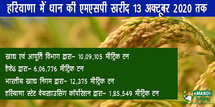 Haryana paddy, moong, millet and maize MSP purchases 2020
