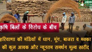 हरियाणा धान की MSP खरीद और कुल आवक अनाज मंडियों में