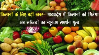 MSP of Vegetables In Madhya Pradesh