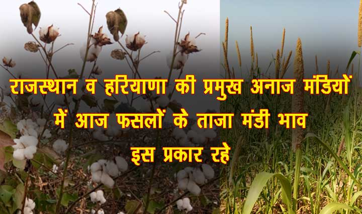 Mandi Bhav 4 November 2020