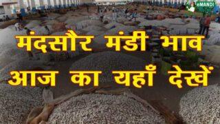 Mandsaur Mandi Bhav 2020