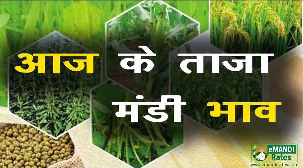 मंडी भाव 25 फरवरी 2021: ये रहे कृषि उपज मंडियों में फसलों के रेट