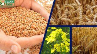हरियाणा गेहूं, सरसों, जौ, चना, दाल और सूरजमुखी MSP फसल खरीद भंडारण 2021