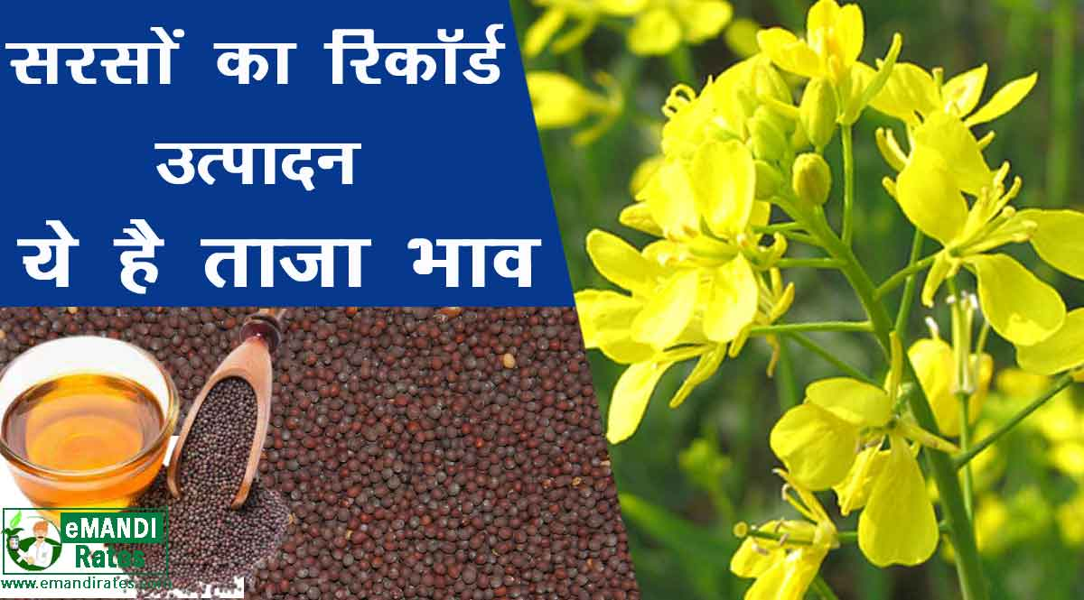 Record production of mustard सरसों का उत्पादन 2021