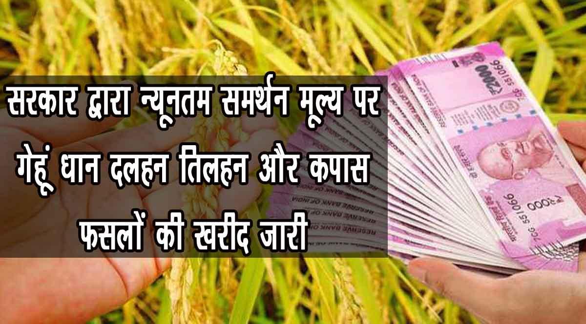 MSP पर गेहूं धान दलहन तिलहन और कपास फसलों की खरीद जारी, अब तक इतने किसानों को मिला लाभ