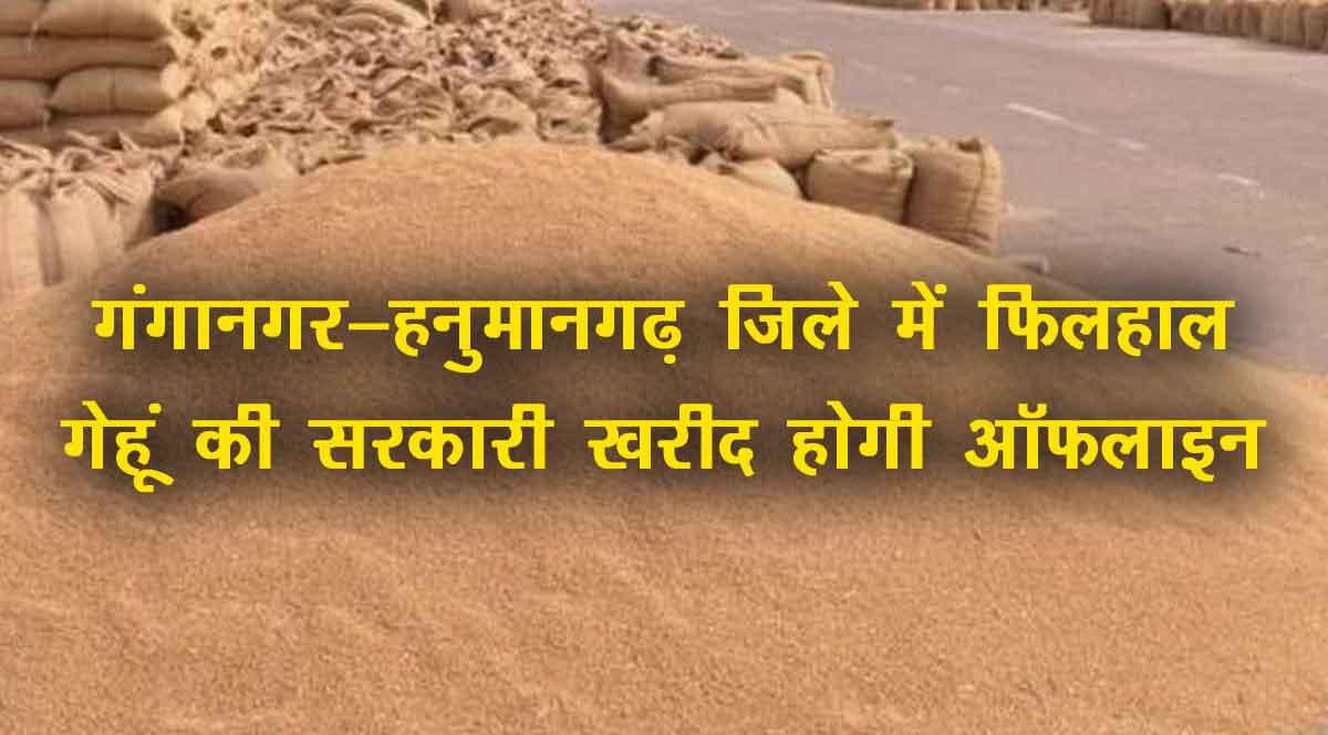 गंगानगर हनुमानगढ़ गेहूं की ऑफलाइन खरीद
