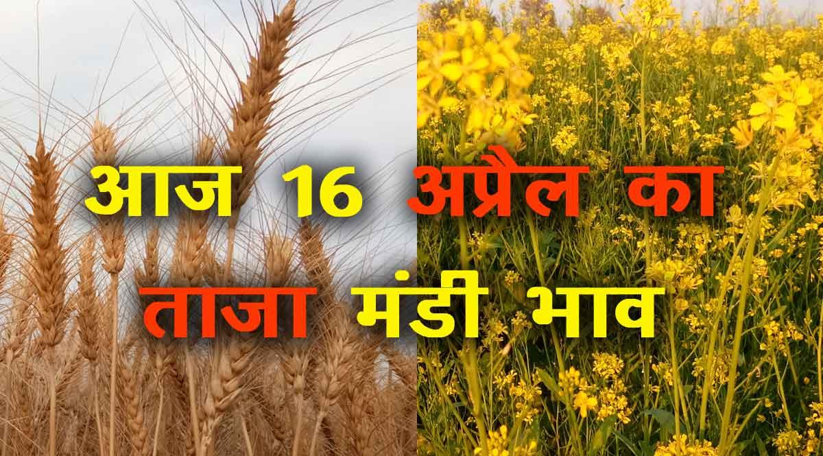 मंडी भाव 16 अप्रैल 2021: सरसों में तेजी का दौर जारी, देखें प्रमुख फसलों के ताजा रेट