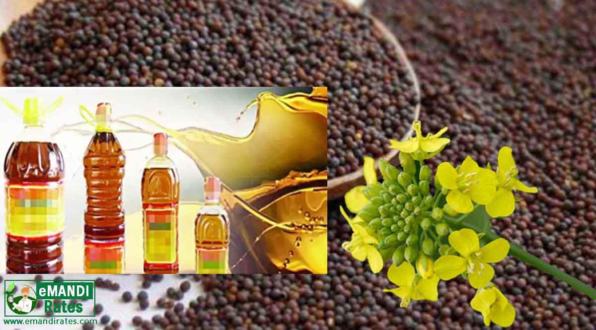 Mandi review Mustard