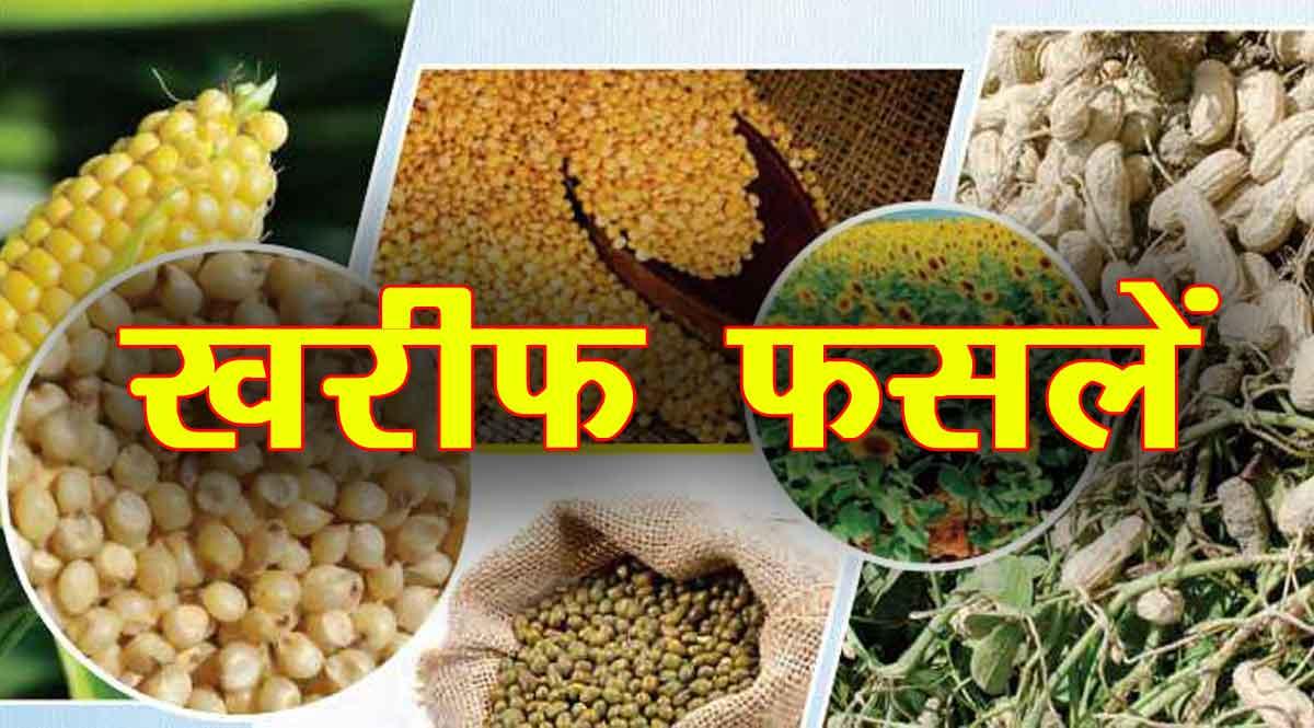 Kharif crops 2021