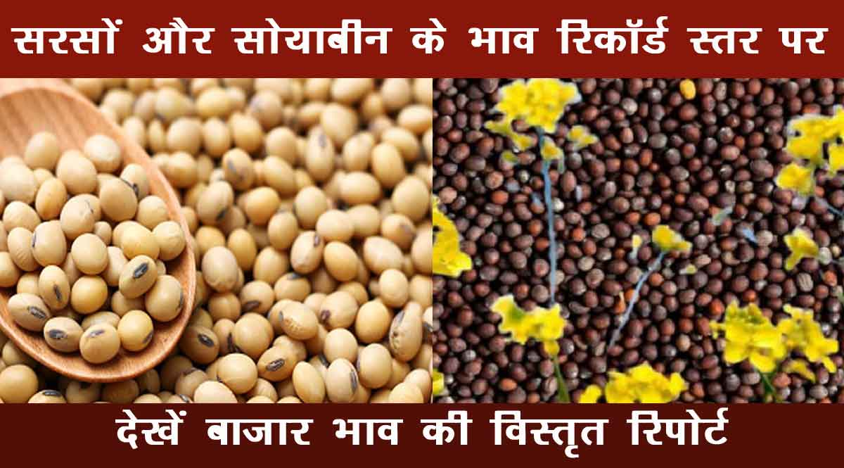 Mustard and soybean prices reached record level
