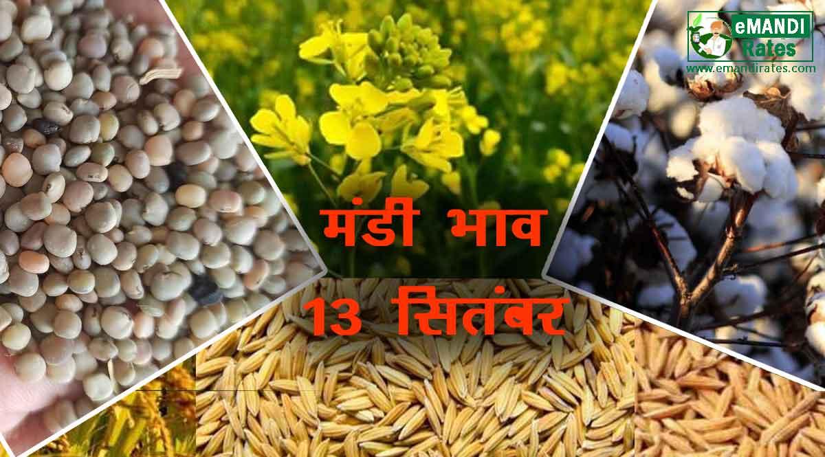 कृषि उपज मंडी भाव 13 सितम्बर 2021