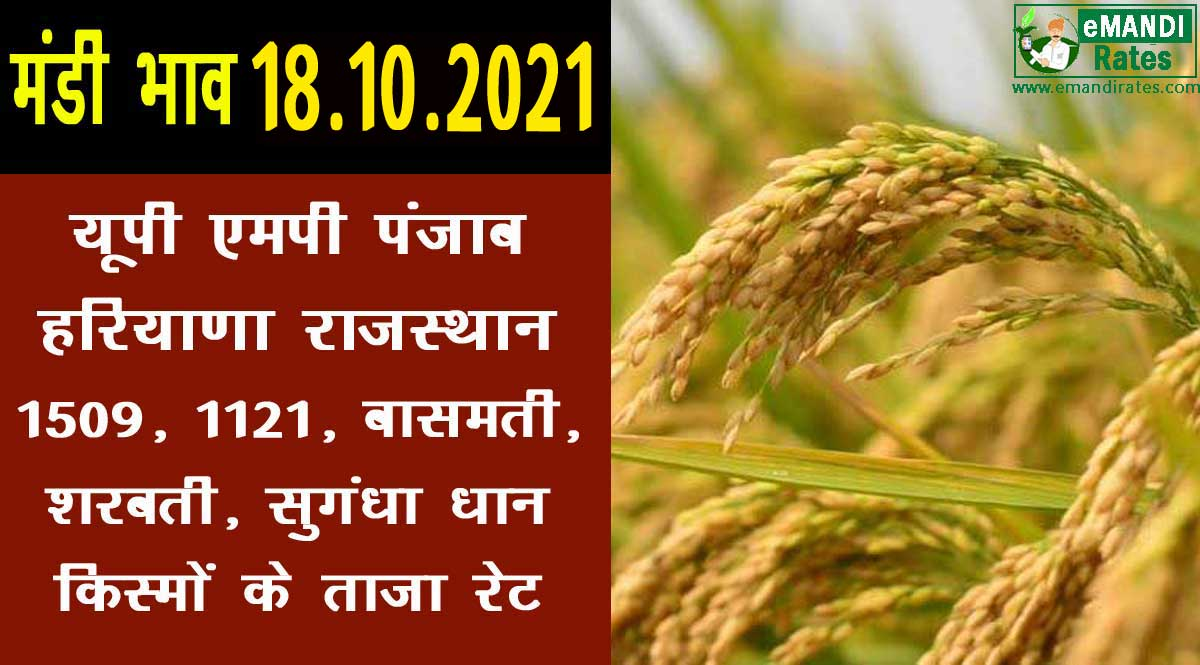 धान का रेट 18-10-2021