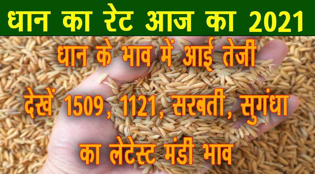dhan price today 2021