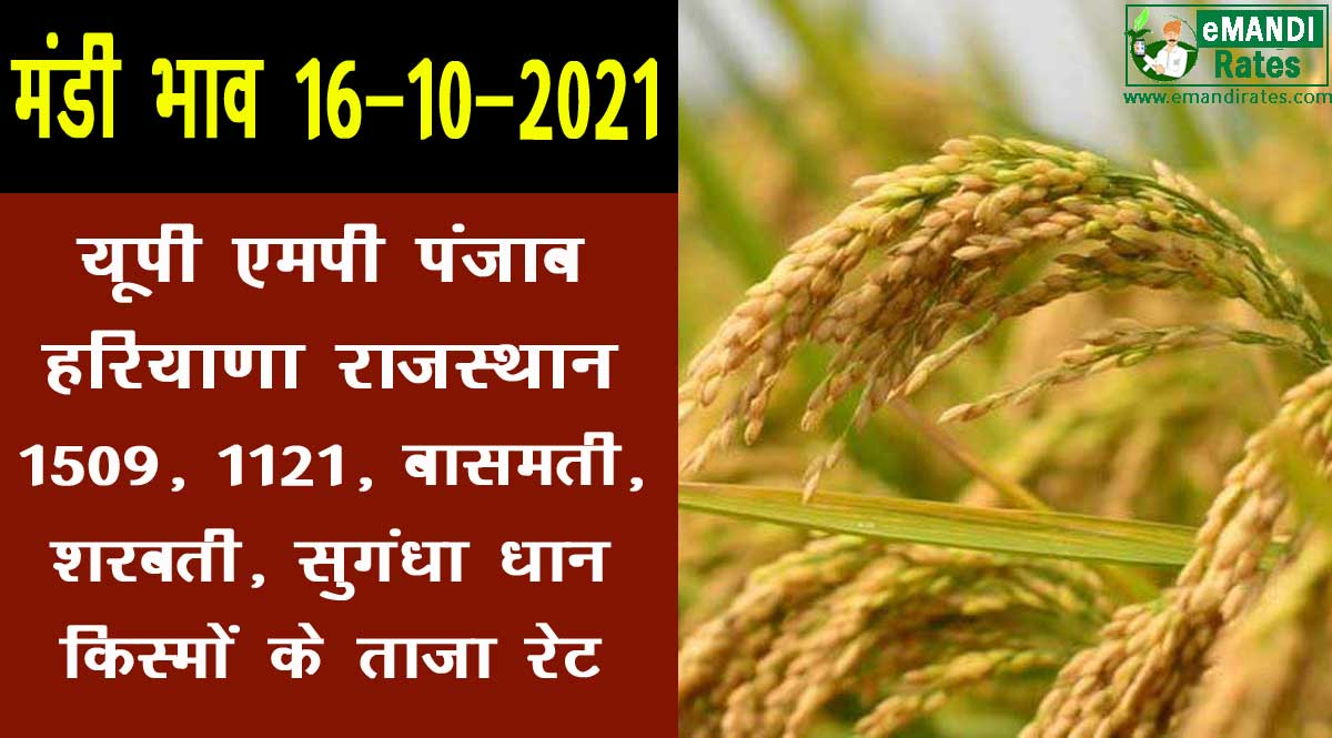 dhan rate today 16 october