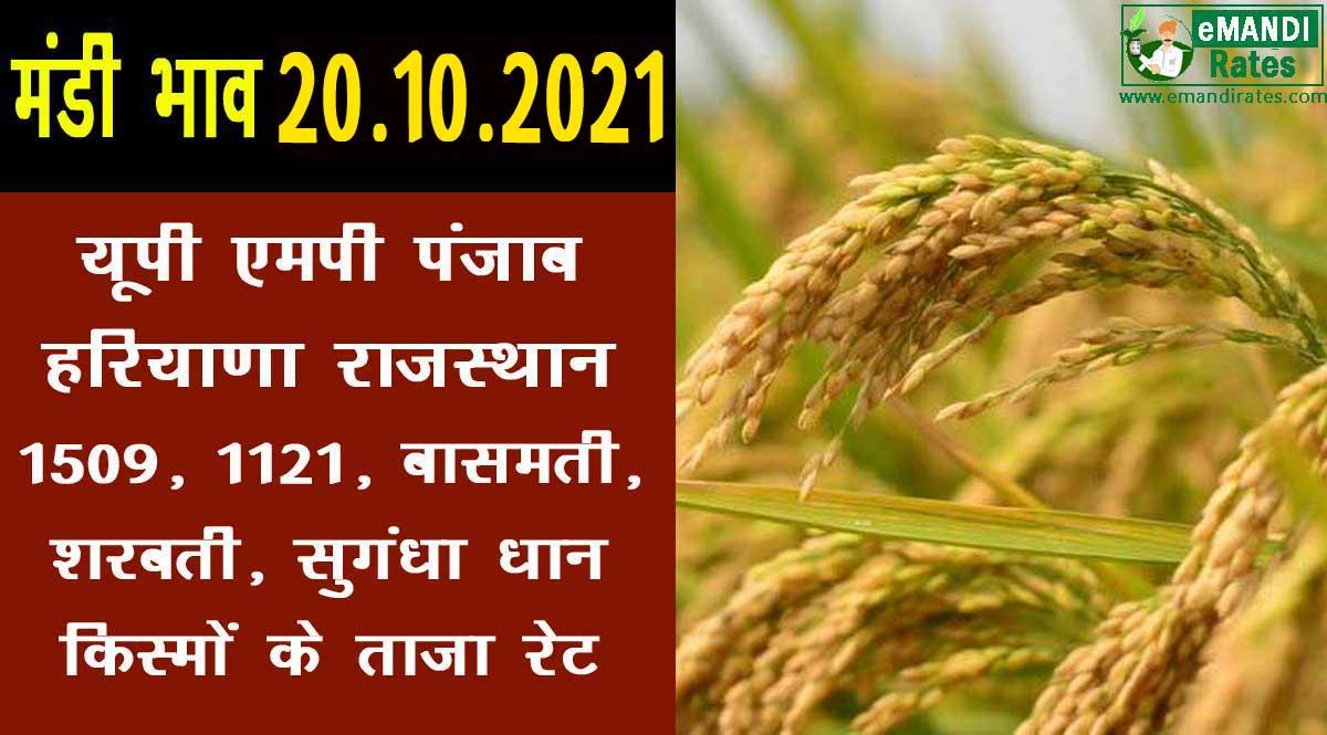 धान का प्राइस 20-10-2021: 1509, 1121, शरबती, सुगंधा पैडी किस्मों के मंडी भाव